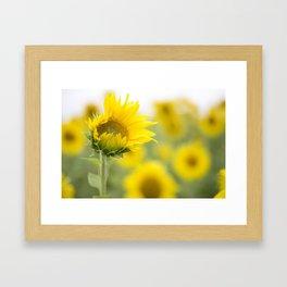 little sunflower  Framed Art Print