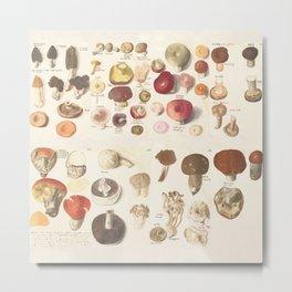 Fungi fun Metal Print