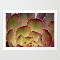 succulent Art Prints featuring Succulent by Shy Photog