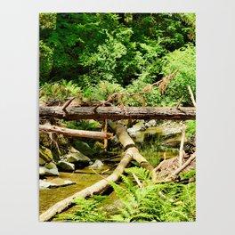 Muir Woods Study 14 Poster