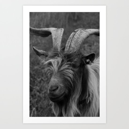 Billy-Goat no.2 Art Print