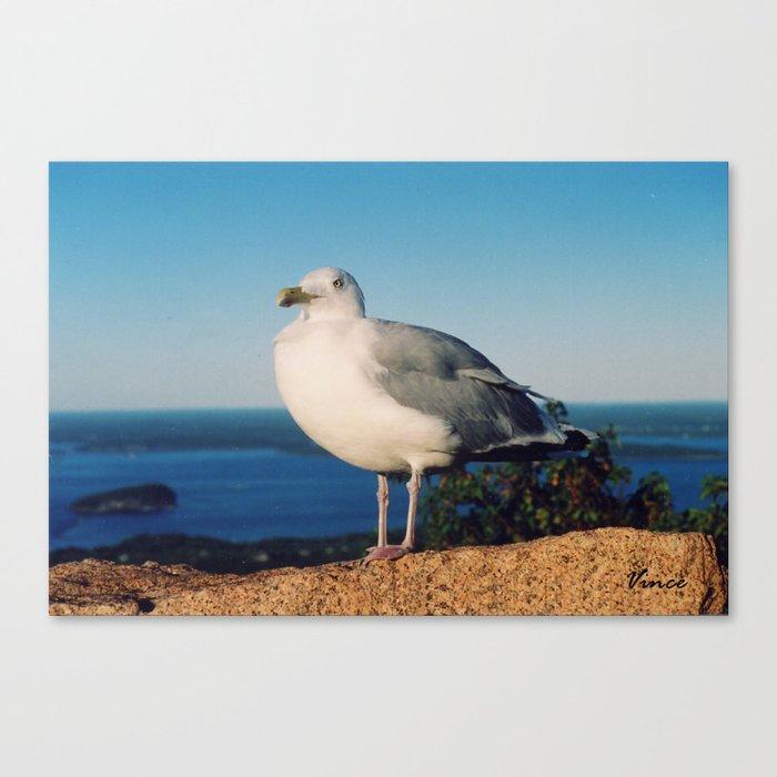 Brooklyn Gull Canvas Print