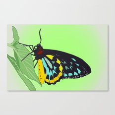 Let it Fly! Canvas Print