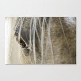 Stallions know Canvas Print