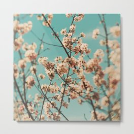 cherry blossoms. Cotton Candy Metal Print