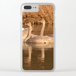 Trumpeter Swan Family Clear iPhone Case