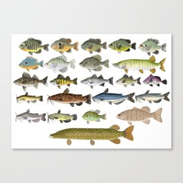 Freshwater Fish Group Canvas Print
