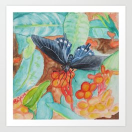 'Pipevine Swallowtail Butterfly' Art Print