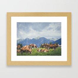 breeding of cows resting on mountain landscape Framed Art Print