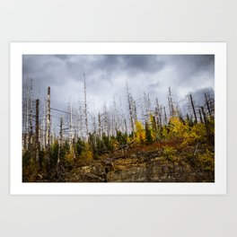 Bare Trees Art Print