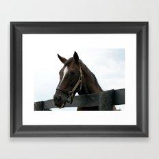 Sunshine Forever - Old Friends Equine, Georgetown KY Framed Art Print