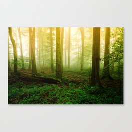 Misty Green Forest Photography Canvas Print