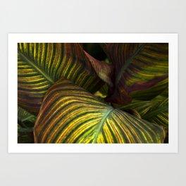 Leaf Hideout Art Print