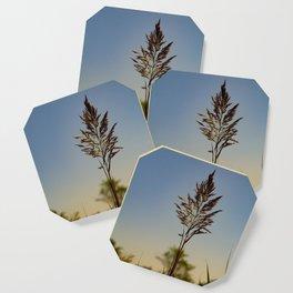 Marsh Grass Coaster