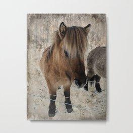 snowy Icelandic horse Metal Print