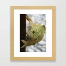 Chameleon: Fifty Shades of Green Framed Art Print