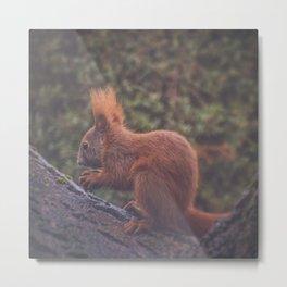 Squirrelicious Metal Print