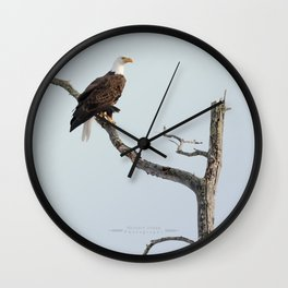 Bald Eagle in the tree Wall Clock