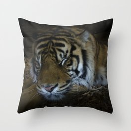 Sleeping tiger painterly Throw Pillow
