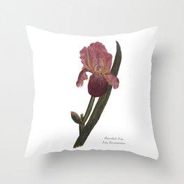 Bearded Iris: Iris Germanica Throw Pillow