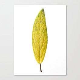 Autumn yellow leave 01 Canvas Print