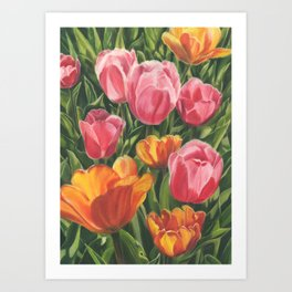 Pink and Yellow Tulips Art Print