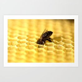 Licking bee Art Print