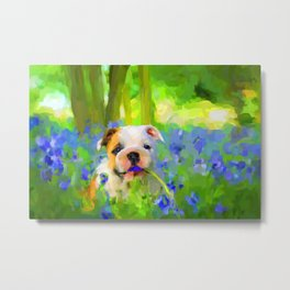 Bulldog and Bluebells Metal Print