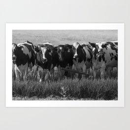 Cows Art Print