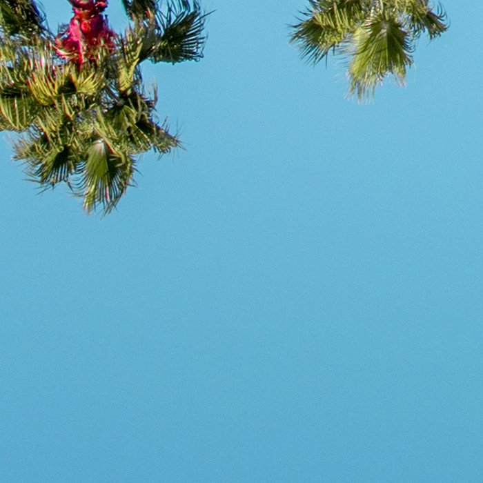 Pink House Roofline with Palm Trees (Palm Springs) Leggings