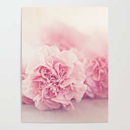 Pale Pink Carnations 4 Poster