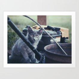 Farm Kitten Art Print