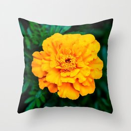 Tangerine Beauty Throw Pillow