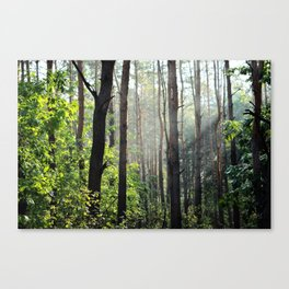 Forest Nature Canvas Print
