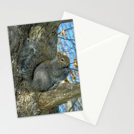 Grey Squirrel In Winter. Stationery Cards