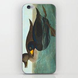 Scoter Duck Vintage Scientific Bird & Botanical Illustration iPhone Skin