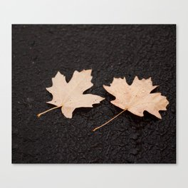 Maple Leaves Photography Print Canvas Print