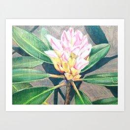 Carolina 1 Art Print