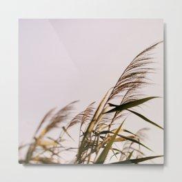 August Breeze #1 Metal Print