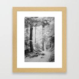 Smokey Mountain Trail - Infrared  Framed Art Print