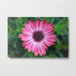Flower Portrait - Pink Sunshine Metal Print