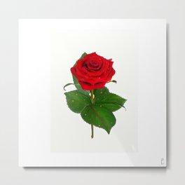 Single Standing Rose (Red) Metal Print