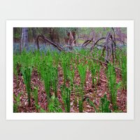 Ferns 1 Art Print