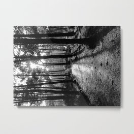 Path to the Light - Black & White Metal Print