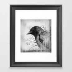 Jackdaw at my Window Framed Art Print