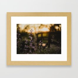 Sunset Walk Framed Art Print
