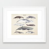 whales Framed Art Prints featuring Whales by BySamantha | Samantha Ranlet