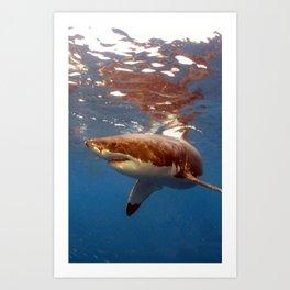Great white shark, Carcharodon carcharias Art Print