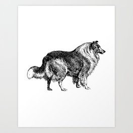 The Collie Art Print