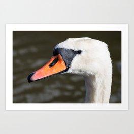 Mute swan landscape Art Print
